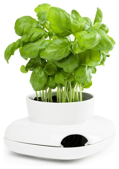 kitchen gifts, herb planter