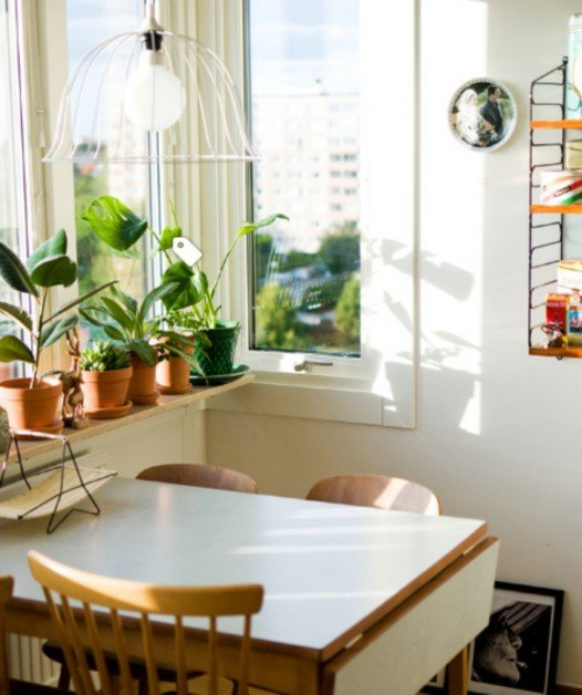 houseplants, design trends